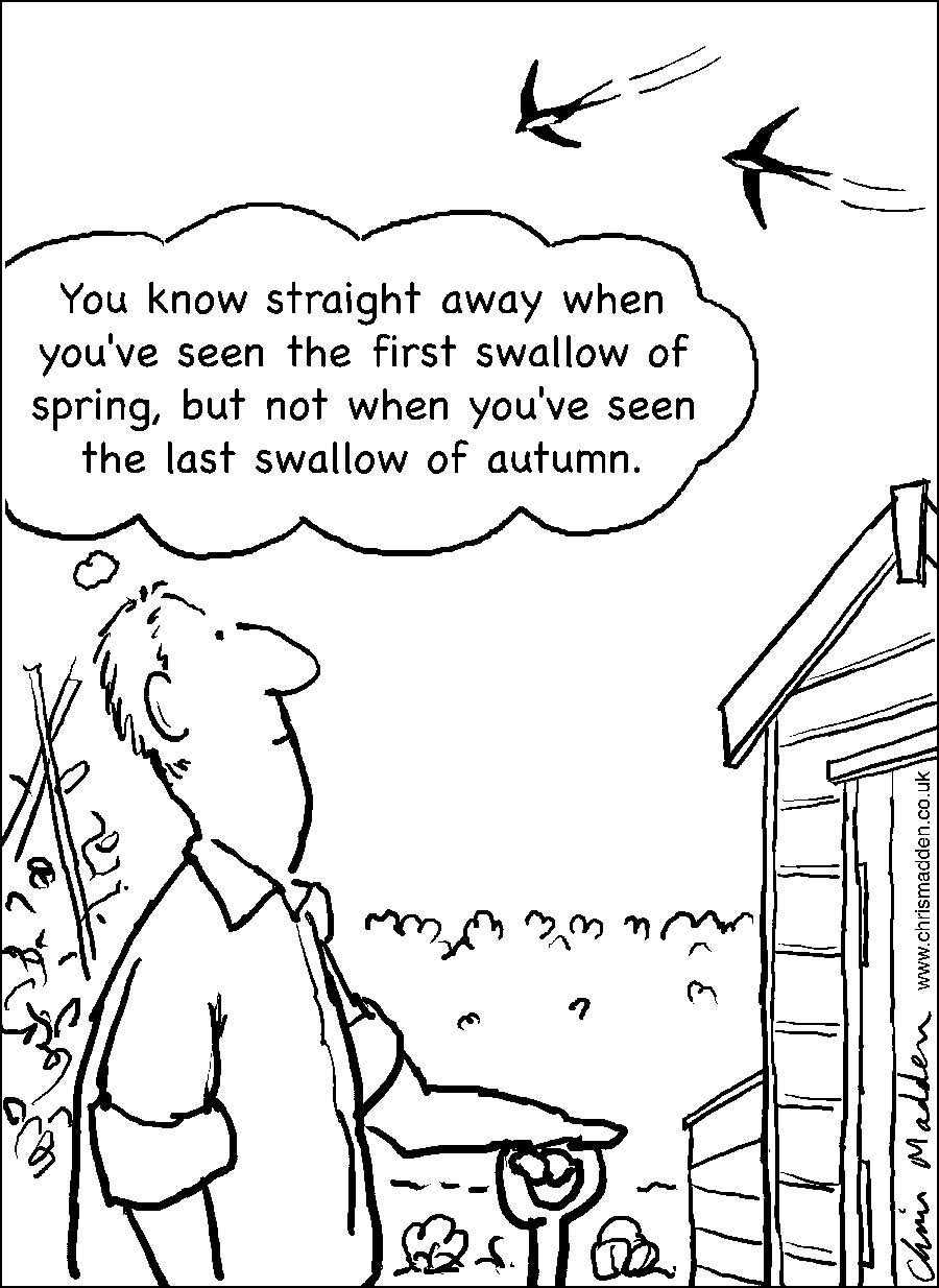 Last swallow of autumn cartoon