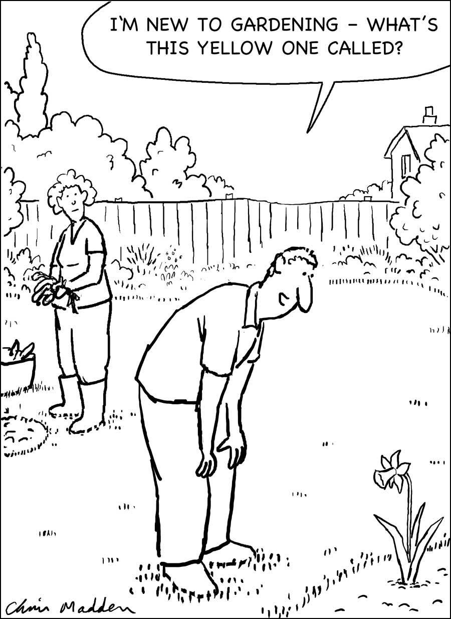 Garden flower cartoon