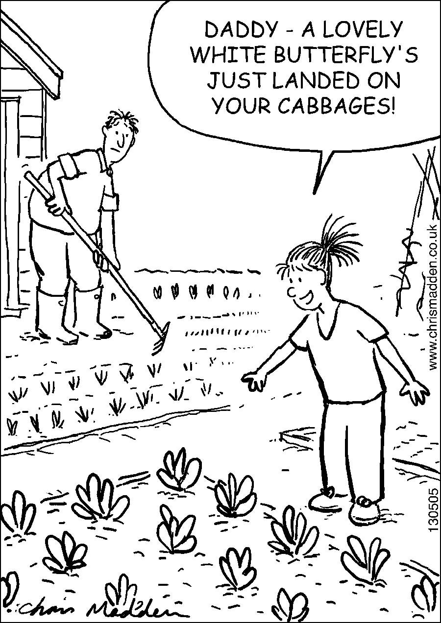 garden wildlife cartoon