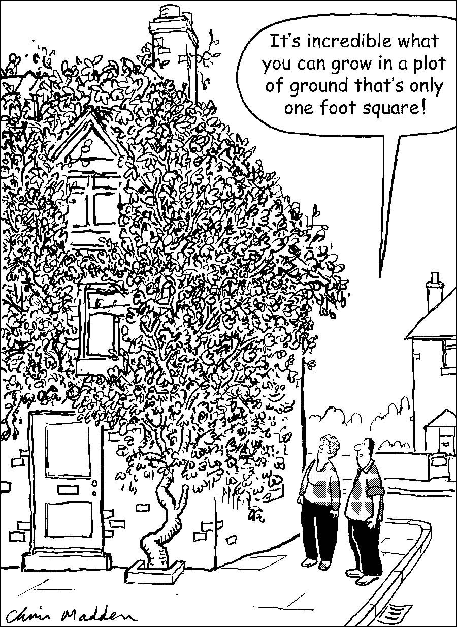 Gardening cartoon - small garden